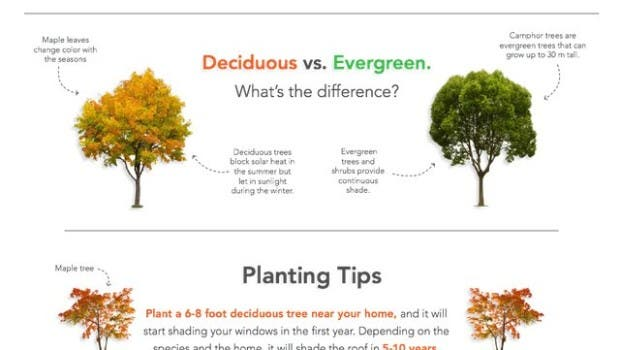 Landscaping101energysaving