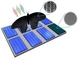 thin film solar boost from butterfly wings