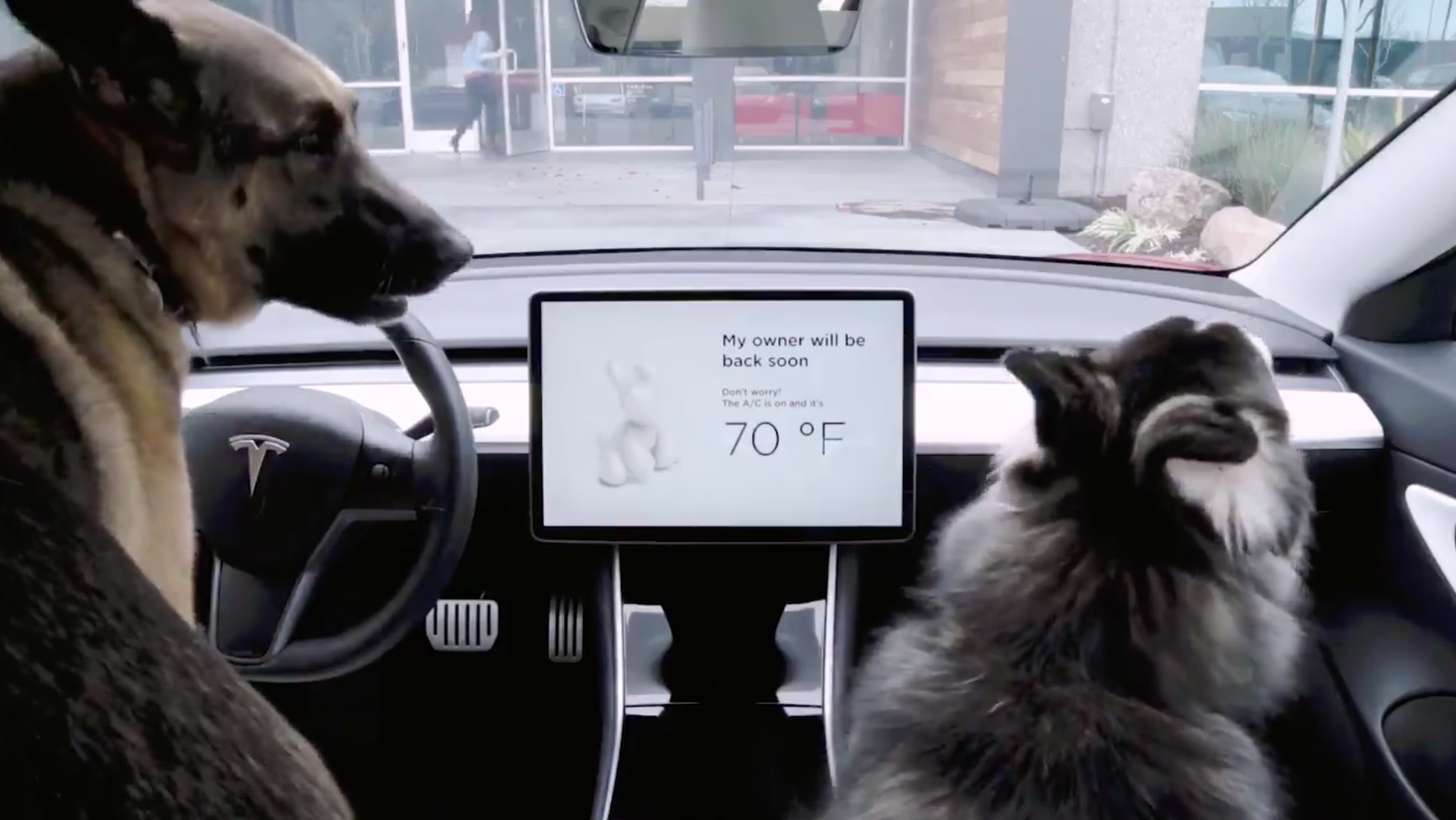 photo image Tesla Disses Cats, Rolls Out Dog Mode In Over-The-Air Update