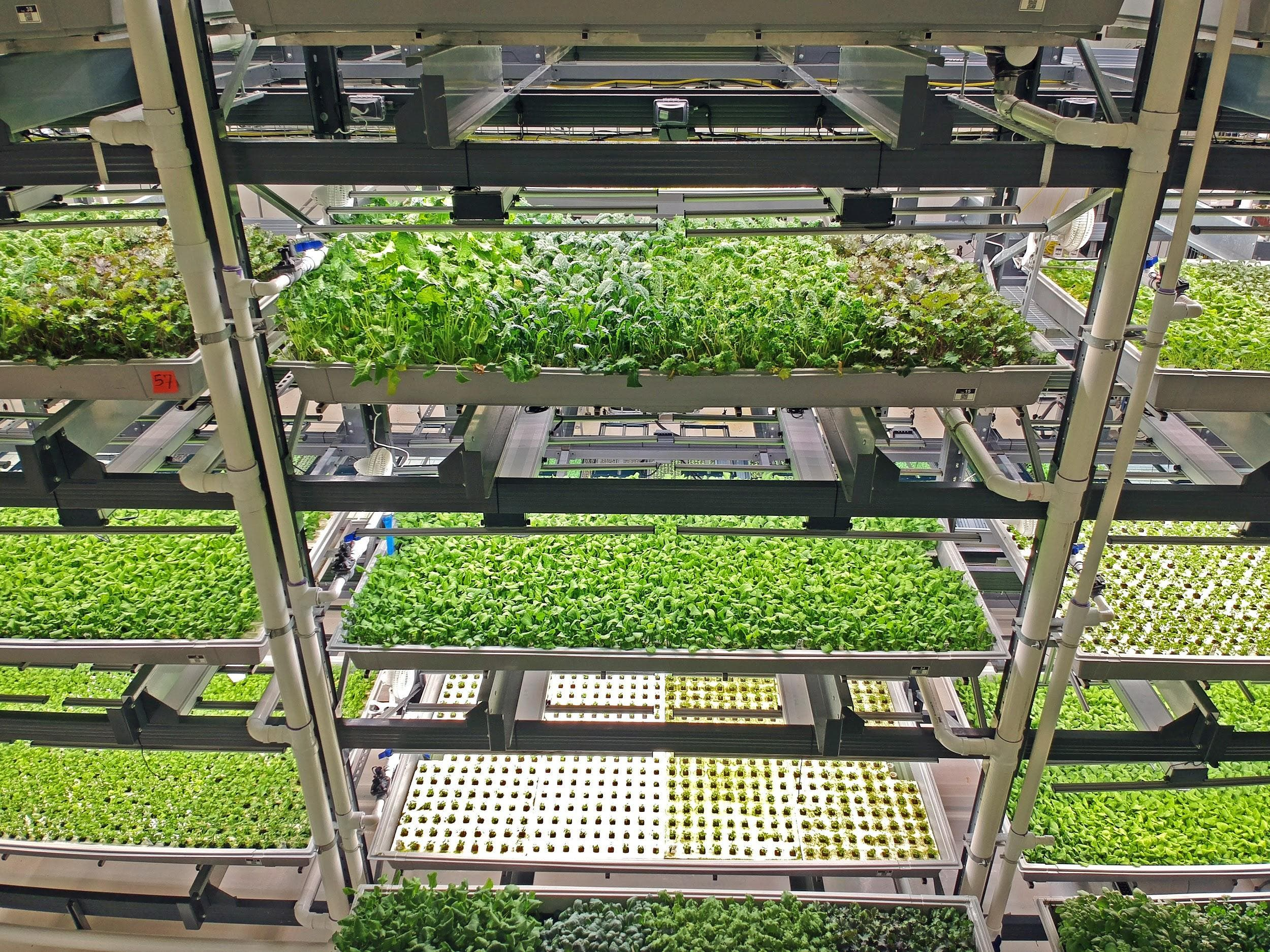 Can Indoor Farming Solve Our Agriculture Problems