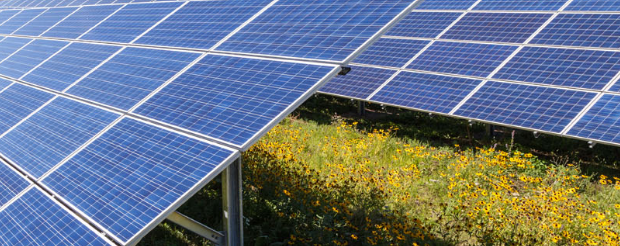 Connexus Energy solar panels and wildflowers