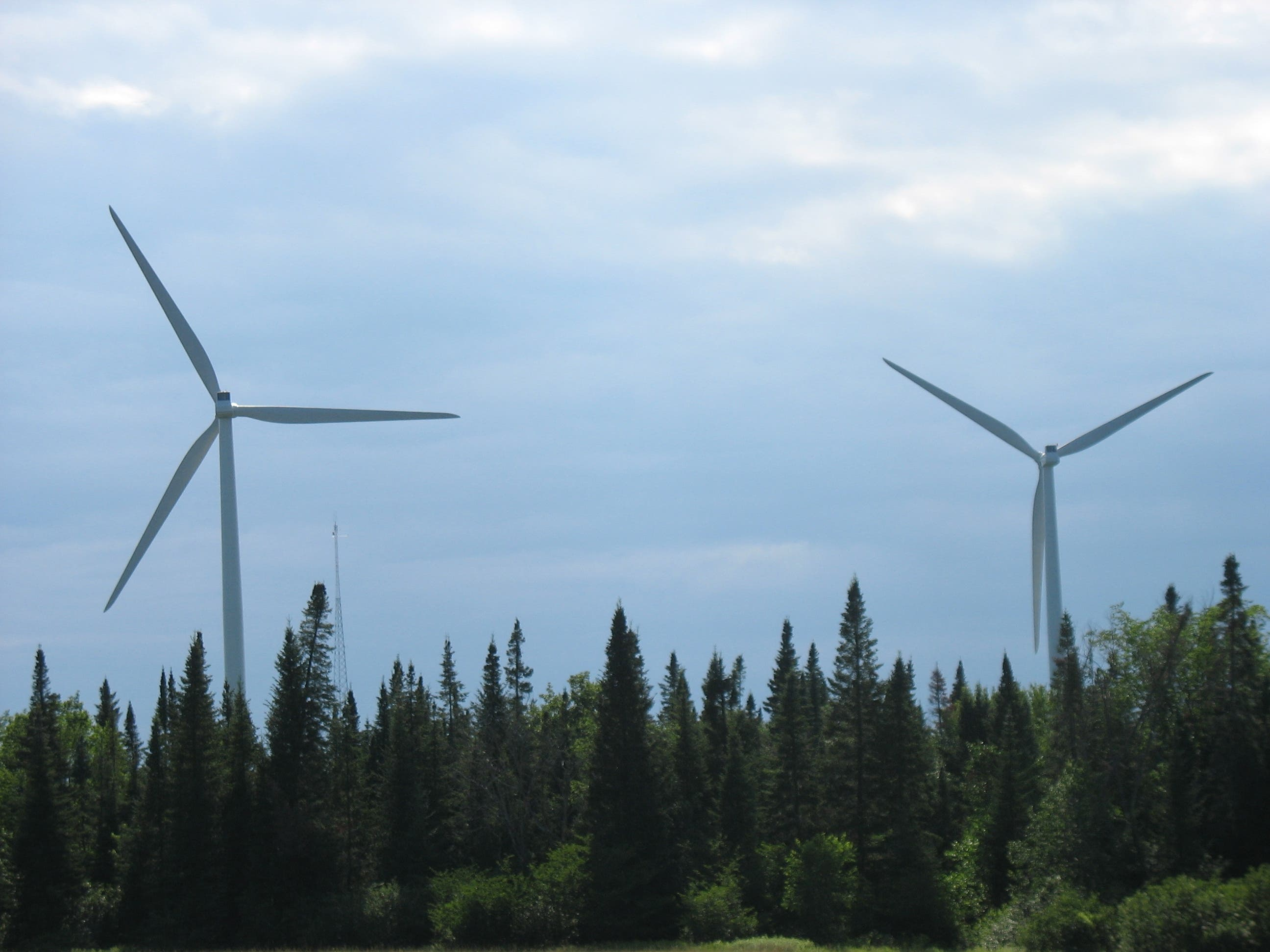 Wind turbines among trees