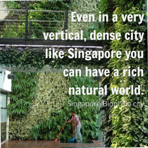 Singapore: Biophilic City