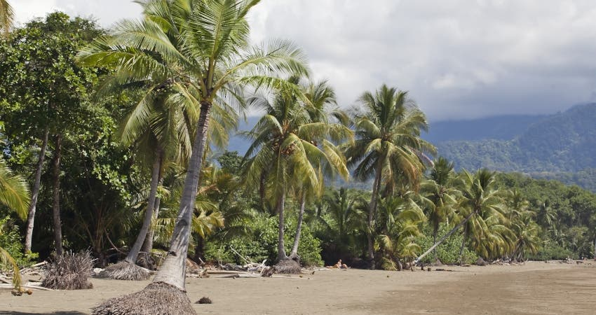 photo of Climate Change Is Reducing The Beach Area At Ballena Marine National Park, Costa Rica image