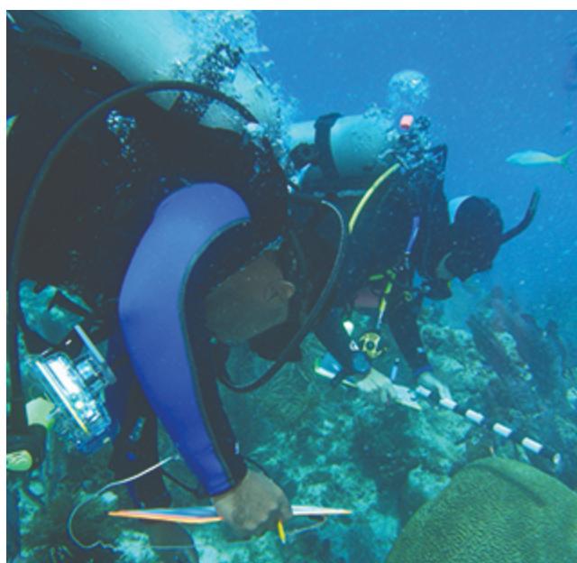 Coral Reef Conservation Program