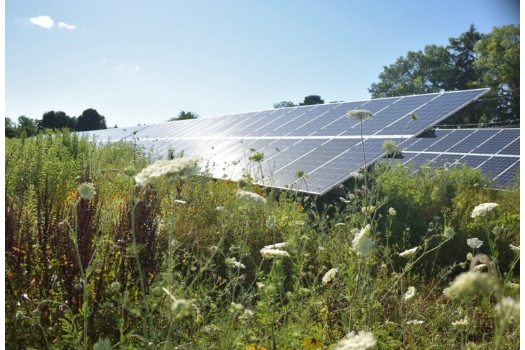 carbon fee to support renewable energy