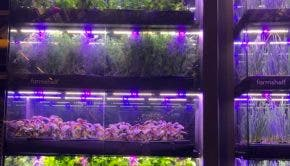 urban farms hydroponics