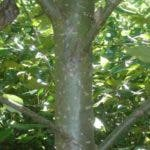 reforestation trees biobased chemicals
