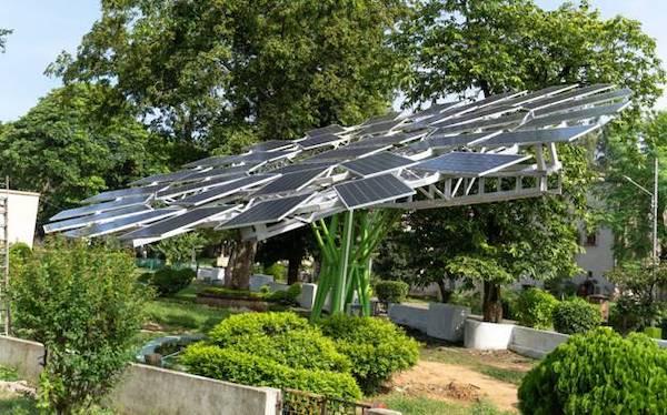 solar trees farming sustainable