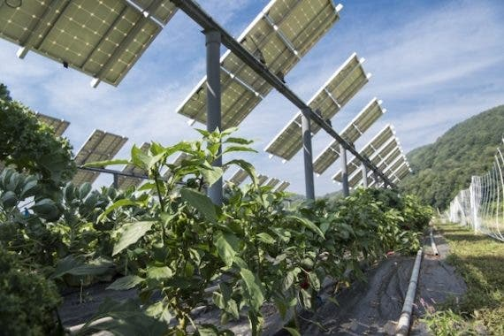 Solar Panels + Agriculture: You Ain't Seen Nothing Yet