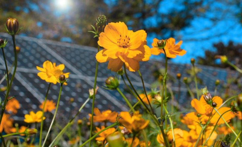 photo of Solar Power + Bees = Extra Benefit for Massachusetts image
