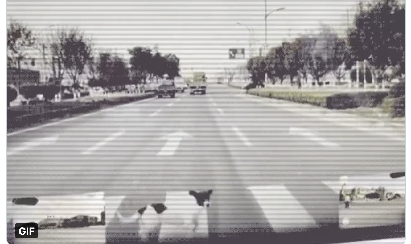 Tesla's Automatic Emergency Braking Saves A Dog
